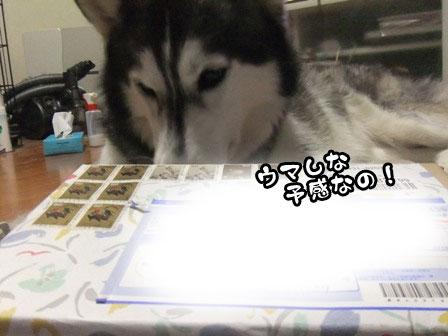 1_20111202210741.jpg