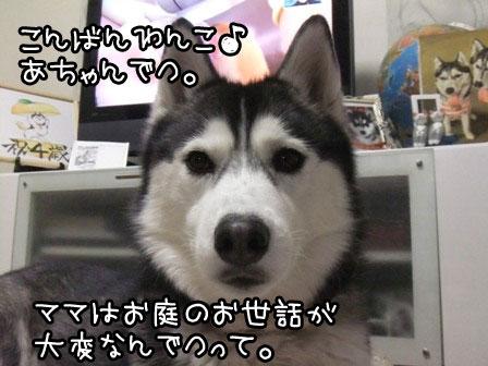 1_20120119185120.jpg
