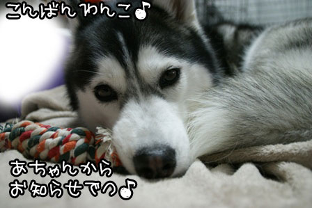 1_20120125212137.jpg