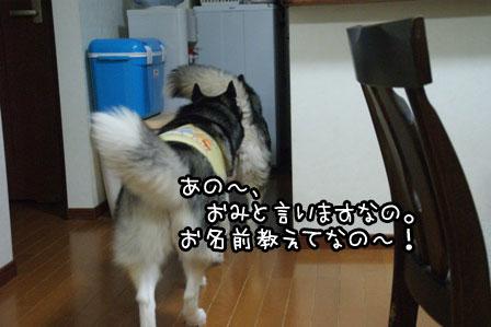 1_20120319181959.jpg