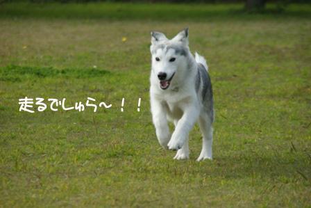 20_20101125213640.jpg