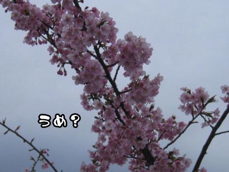 20_20110306200755.jpg