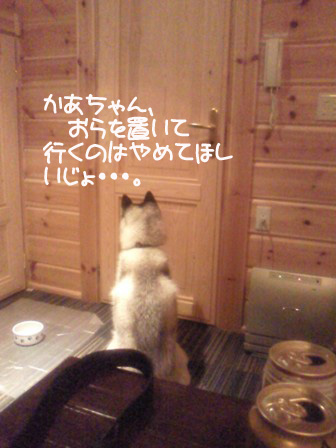 21_20101216201537.jpg