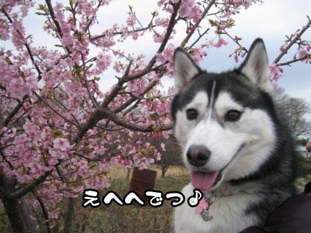 21_20110306200803.jpg
