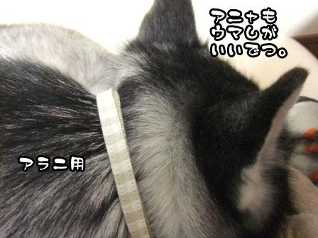 21_20120110210936.jpg