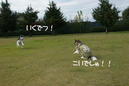 22_20101125213653.jpg