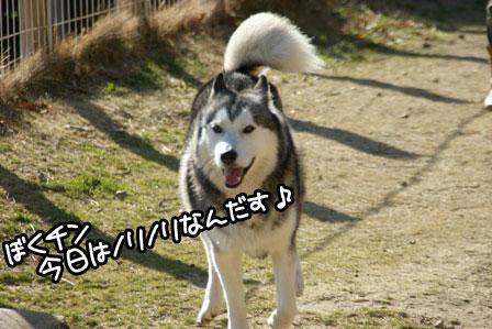 22_20110110211611.jpg