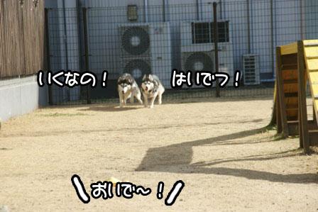 22_20110125185402.jpg