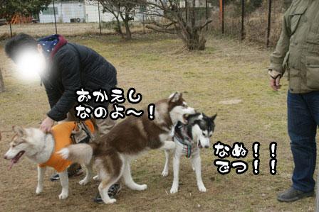 22_20110208202159.jpg