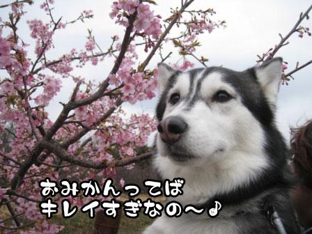 22_20110306200810.jpg