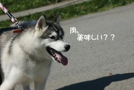 23_20100927125100.jpg