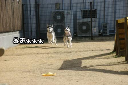 23_20110125185409.jpg