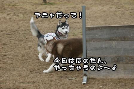 23_20110208202208.jpg