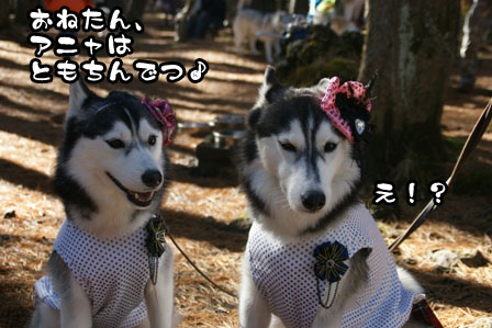23_20111210192545.jpg