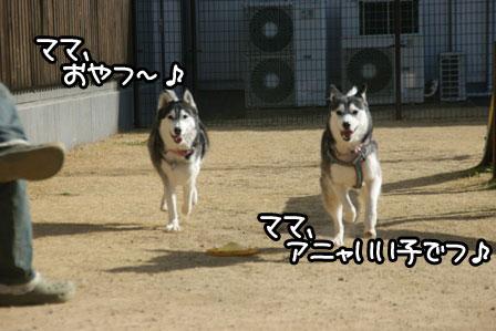 24_20110125185415.jpg