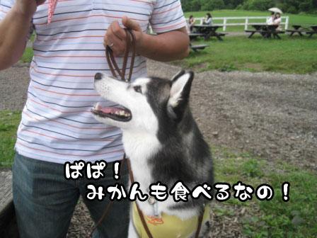 24_20110804210030.jpg