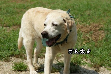 24_20110810202529.jpg