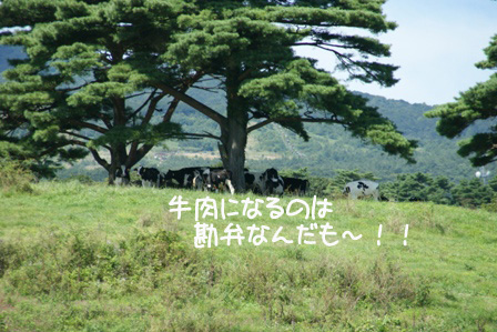 25_20100927125116.jpg