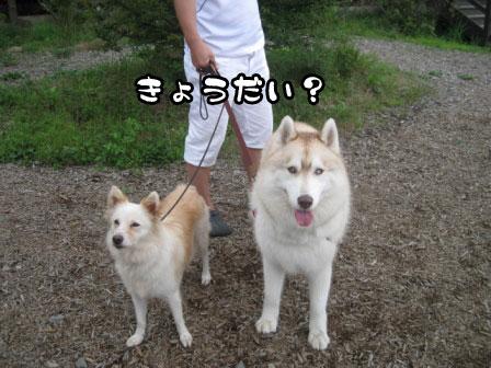 25_20110804210036.jpg
