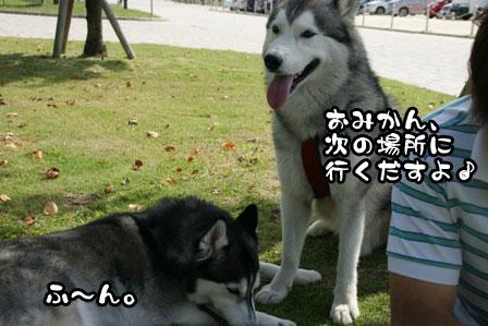 26_20111003204505.jpg