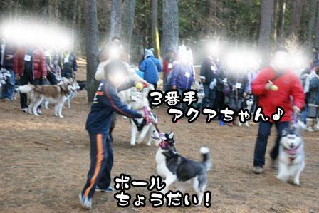 27_20111210192612.jpg