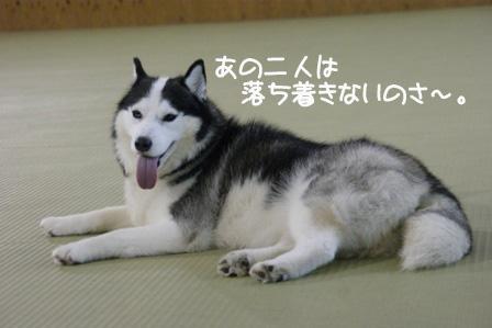 29_20101009205612.jpg