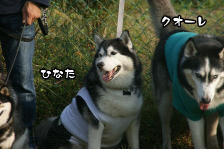 29_20111013210036.jpg