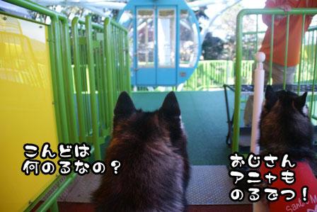 29_20111115211315.jpg