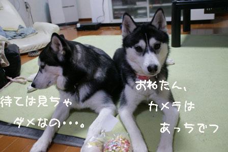 2_20100303205443.jpg