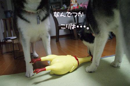 2_20100315222258.jpg