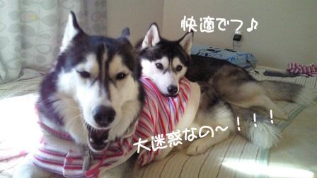2_20101107200647.jpg