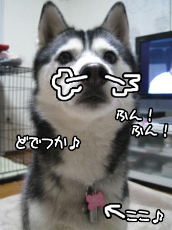 2_20110127202408.jpg