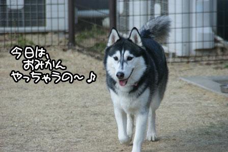 2_20110201193134.jpg