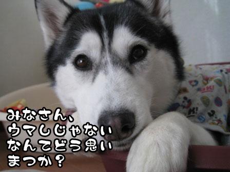 2_20110214211825.jpg