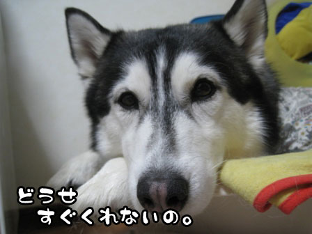 2_20110225200817.jpg