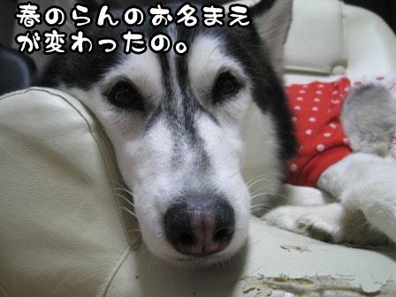 2_20110228211644.jpg