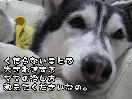 2_20110309212635.jpg