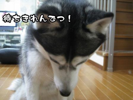 2_20110420204701.jpg