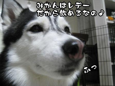 2_20110421201516.jpg