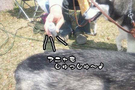 2_20110424204652.jpg