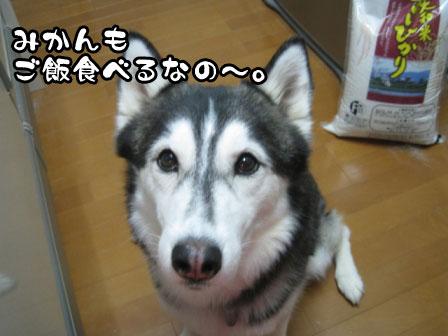 2_20110531214123.jpg