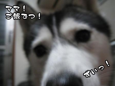 2_20110601214531.jpg