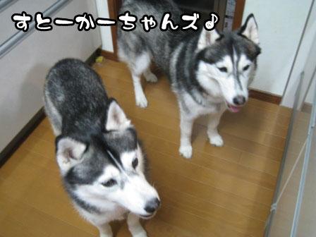2_20110603215229.jpg