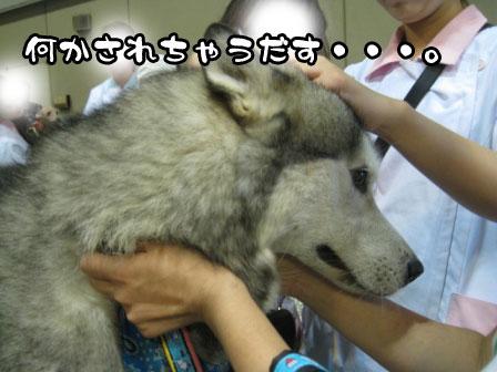 2_20110723200231.jpg