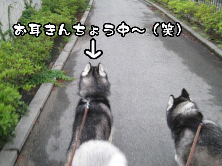2_20110726200417.jpg