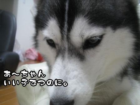2_20110808200457.jpg