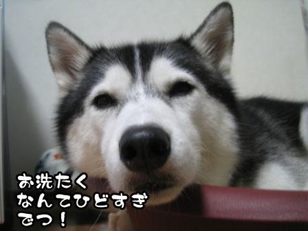 2_20110831205502.jpg