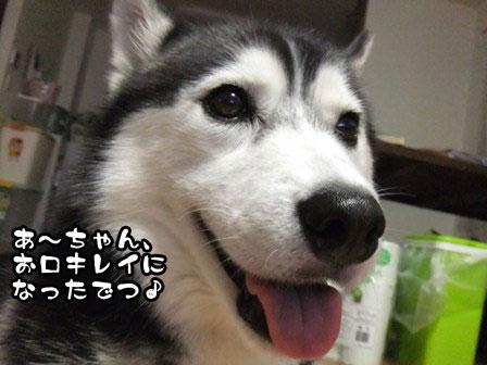 2_20110910201709.jpg
