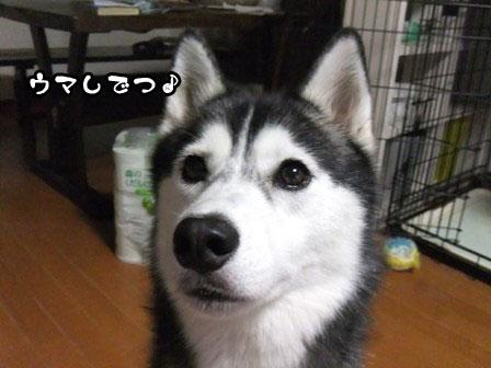 2_20110912211731.jpg