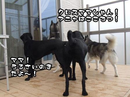 2_20111103215441.jpg